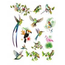 Sır Üstü Renkli Dekal Birds...