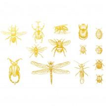 Sır Üstü Dekal Gold Bugs 2...