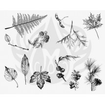 DSS-111 Botanical - Leaves...