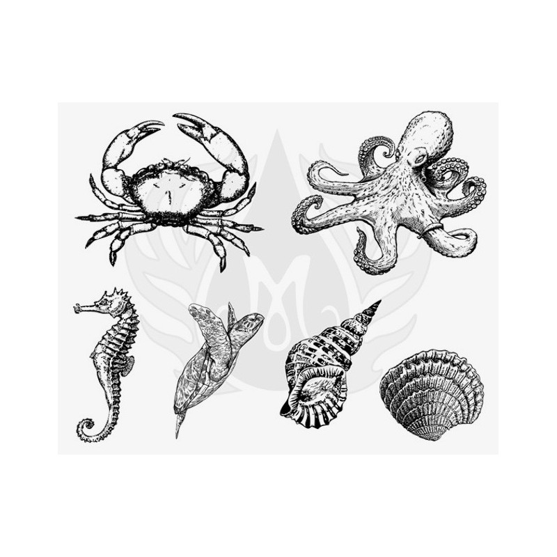 DSS-148 Sea Life 3-XL Mayco Designer Silk Screen - İpek Baskı (Serigrafi) 30x38 cm Deniz Canlıları 3-XL